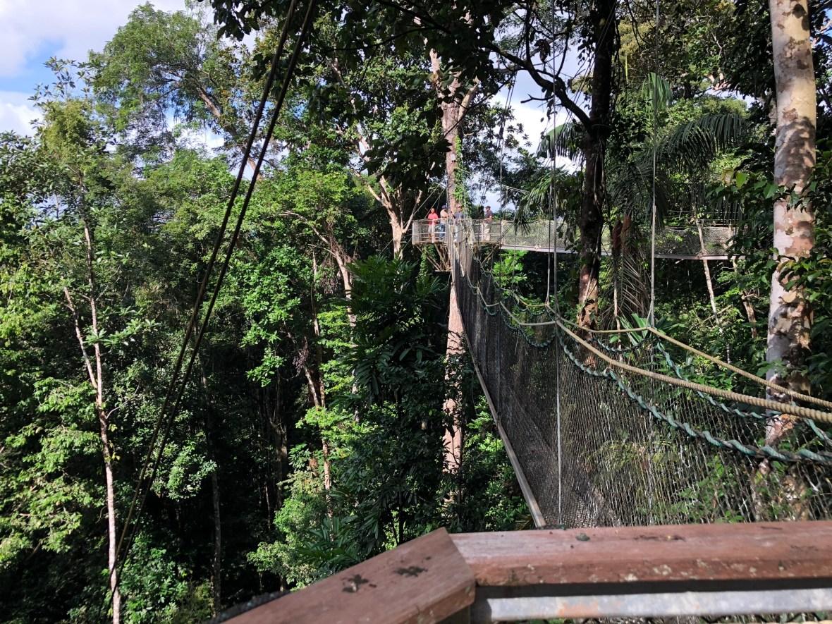 Iwokrama Canopy Walkway 2