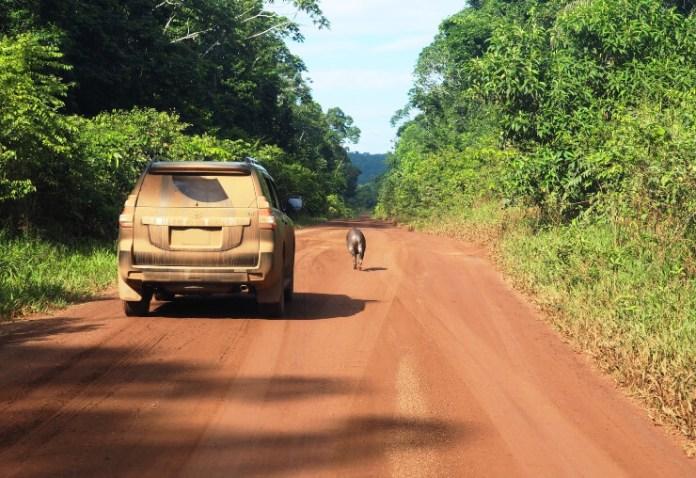 indira-mattai-guyana-vehicle