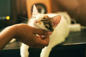 Cats love it when you scratch their fur.