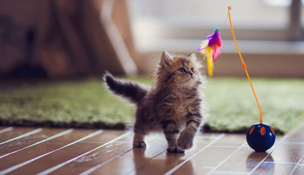 Cats are funnier