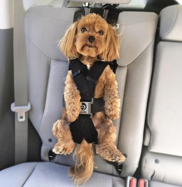 Dog seat for cars