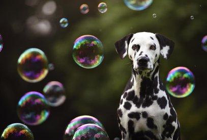bubble dog pose