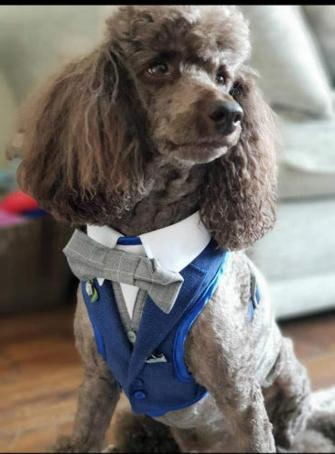 Customized Dog Harness