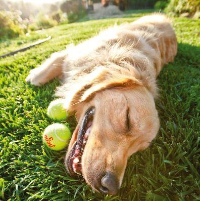 tired dog pose