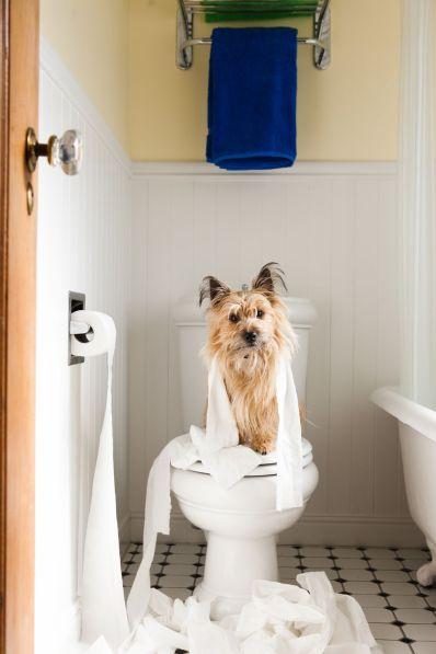 Dog naughty pose