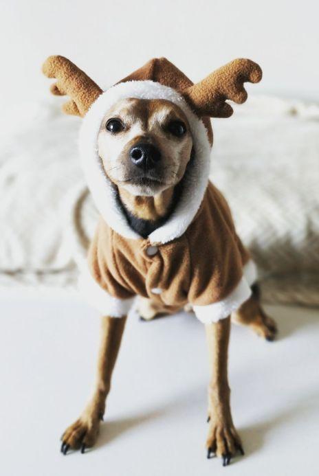 Dog in Onesie