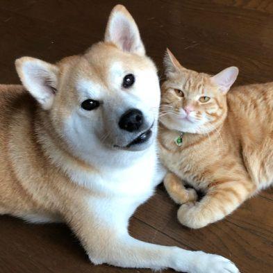 With Their Feline Siblings