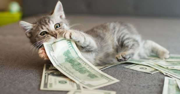 cats make the best pet in money