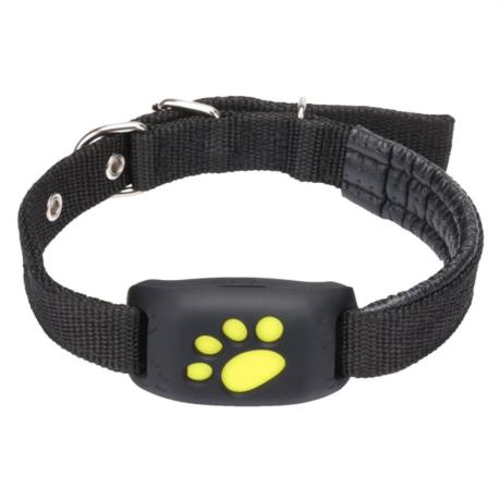 GPS Tracker Collar as birthday gift