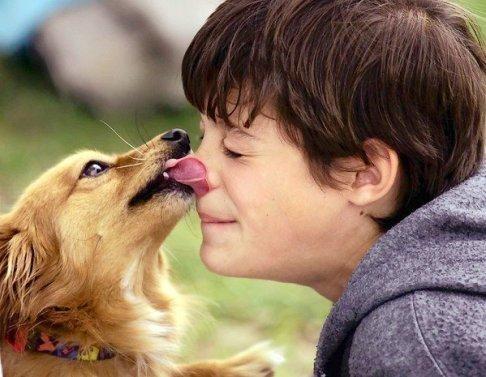 Teach Your Dog 'To kiss' Tricks to Teach Your Dog