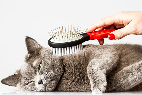 Brushing the Cat (Cat Grooming)