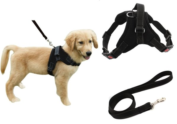 Dog Owner Essentials