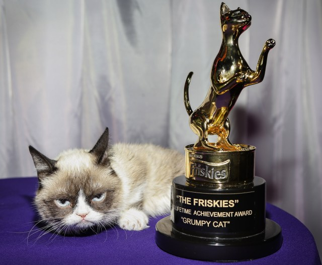 Awards (What you need to know about cat shows)