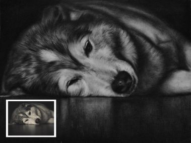 Handmade Charcoal Pet Portrait from Photo