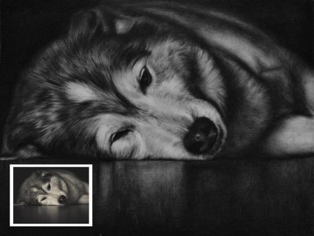 Charcoal Pet Portrait from Photo