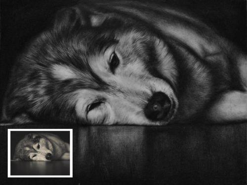 Pet Memories: Charcoal Pet Portrait from Photo