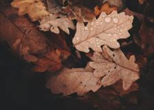 Talking to the rain- Essay