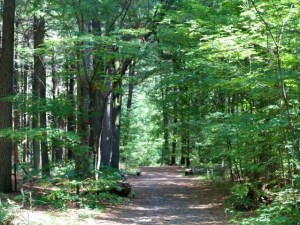 Adventure - A nature trail to remember