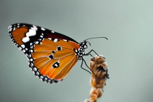 The journey - From caterpillar to butterfly