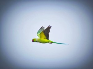 World parrot day - Why I love parrots