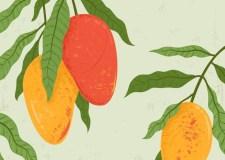 Food Wars – Mango Versus Knife | Bookosmia