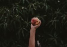 Planting A Mango Tree – An Unusual Puppet Story | Bookosmia