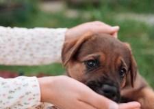 Newborn Puppy – Helping A Hurt Dog | Bookosmia