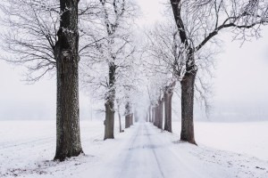 Elfchen poems - Memories of rain, snow and everything nice