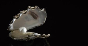 Pearls - No jewellery is worth wounded oysters