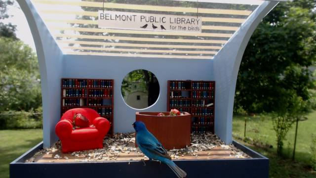 Library for the birds c