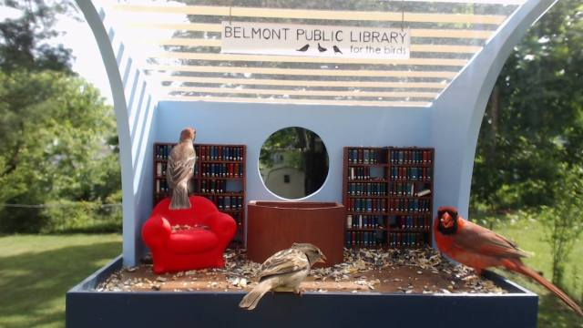 Library for the birds d