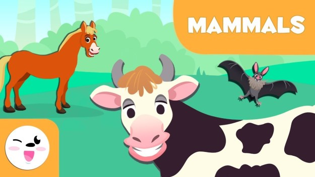 Mammals Syllabus Notes 2021 Download Study Materials BOOK PDF