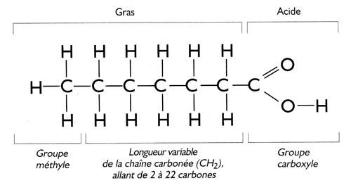 Acides Gras