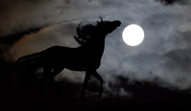 THE MAGICAL HORSE MADE OF MIST