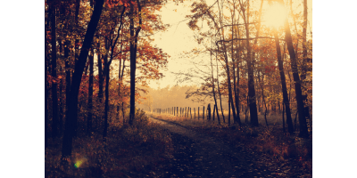 Autumn is a poem about hopelessness and depression