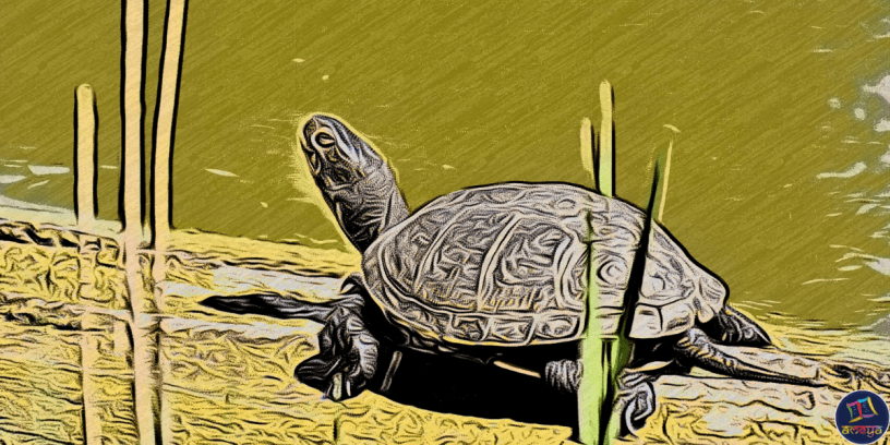 The Talkative Turtle is the folk tale about a motormouth tortoise who meets his untimely death due to his non-stop talking