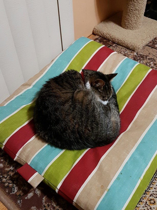 Marco, curled up on his favourite cushion.