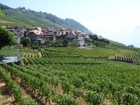 Photo 45: Terraced vineyards in Bourg-en-Lavaux