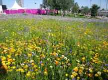 Wild flowers in the Olympic Park