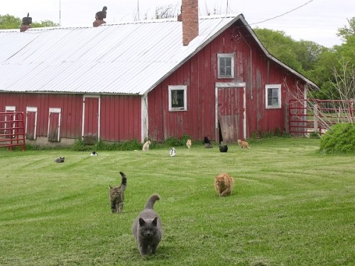 cats and barn