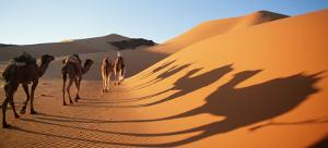 Sahara 300
