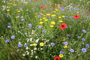 Do we like flowers because of sociobiology?