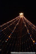 Zilker Park Tree Illumination 2013 - Austin, TX | Books, Cupcakes, and Cats Chasing Chipmunks
