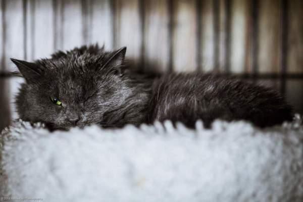 a grouchy kitten, recently caught