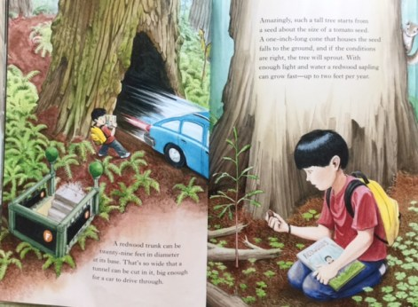 redwoods discovery