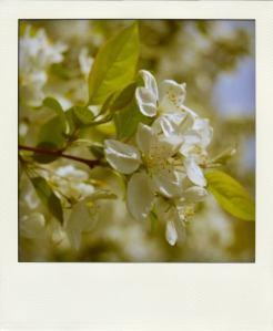 spring5-pola01USE