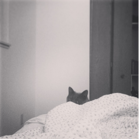 cat-snaggle-3