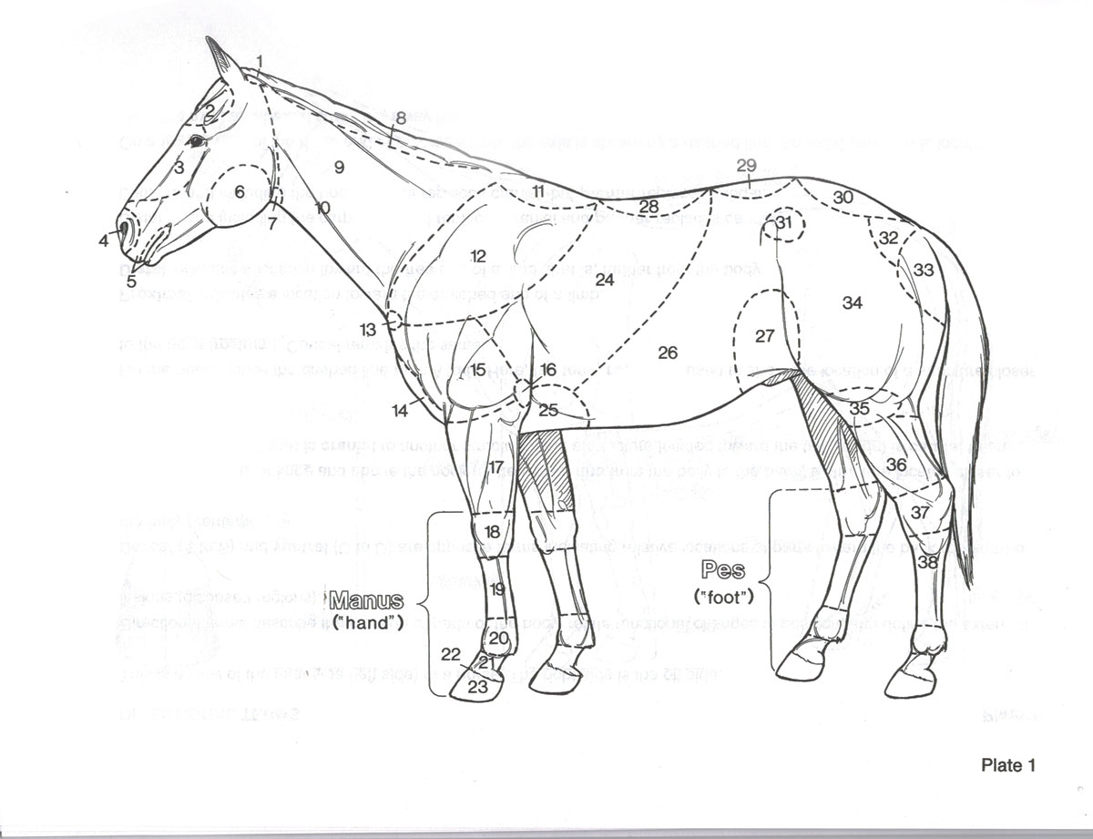 Care How To Tell A Horse S Age By This Teeth Booksonhorses