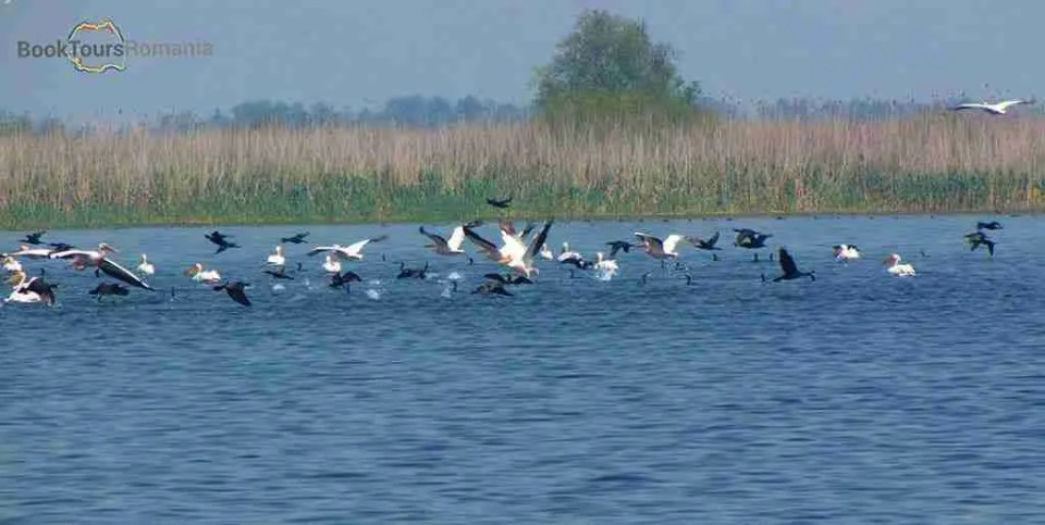 Danube delta bird watching