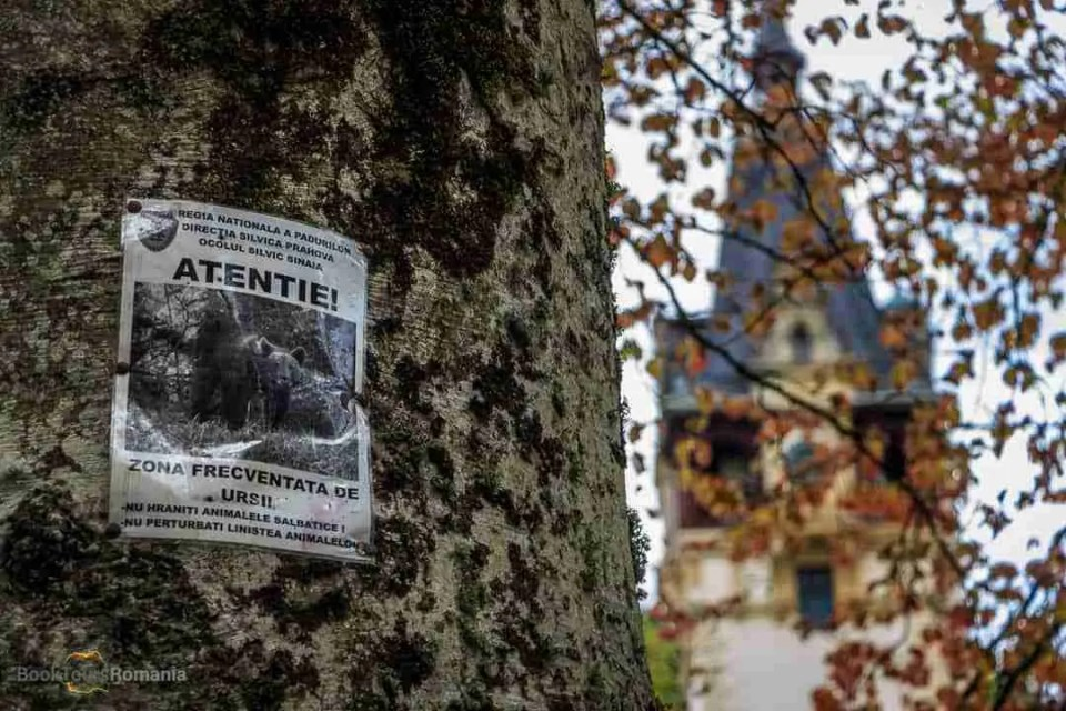 Be aware of bears, sign in Sinaia